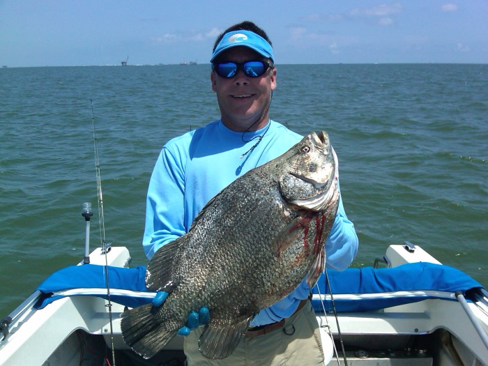 blackfish-06192011