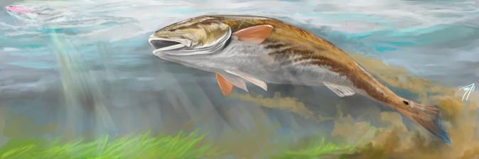 Topwater Redfish.jpeg